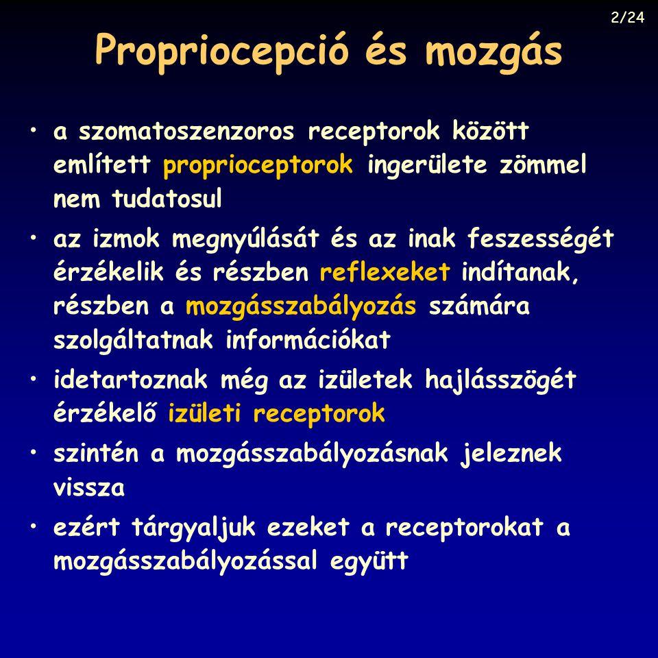 Propriocepció és mozgás a szomatoszenzoros receptorok között említett proprioceptorok ingerülete zömmel nem tudatosul az izmok megnyúlását és az inak