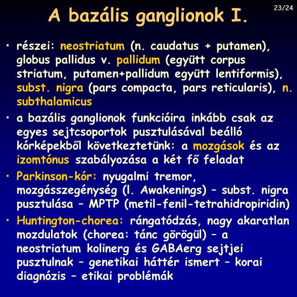 A bazális ganglionok I. részei: neostriatum (n. caudatus + putamen), globus pallidus v. pallidum (együtt corpus striatum, putamen+pallidum együtt lent