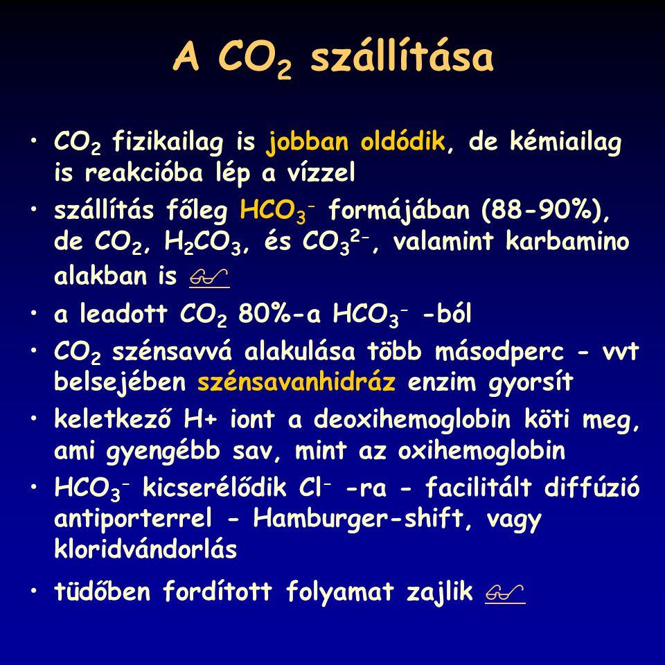 A CO 2 szállítása CO 2 fizikailag is jobban oldódik, de kémiailag is reakcióba lép a vízzel szállítás főleg HCO 3 - formájában (88-90%), de CO 2, H 2