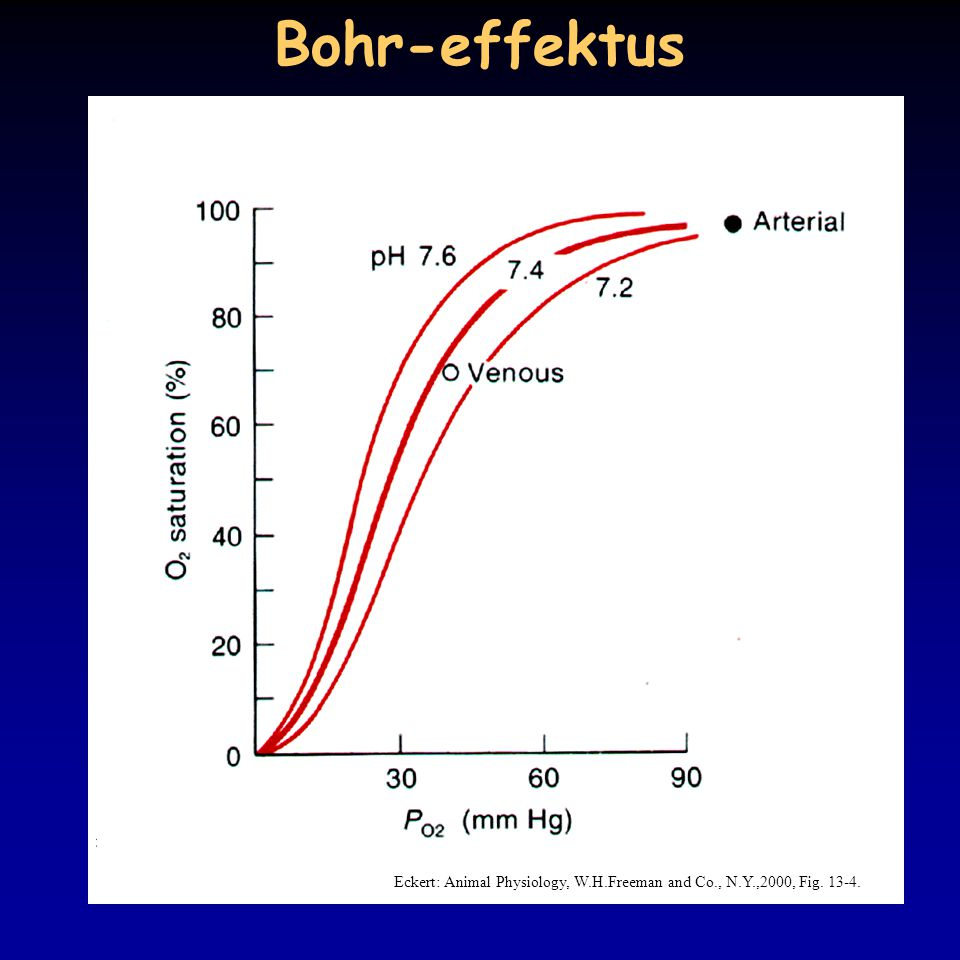 Bohr-effektus Eckert: Animal Physiology, W.H.Freeman and Co., N.Y.,2000, Fig. 13-4.