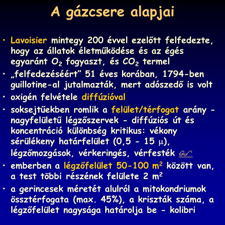 """A gázcsere alapjai Lavoisier mintegy 200 évvel ezelőtt felfedezte, hogy az állatok életműködése és az égés egyaránt O 2 fogyaszt, és CO 2 termel """"felf"""