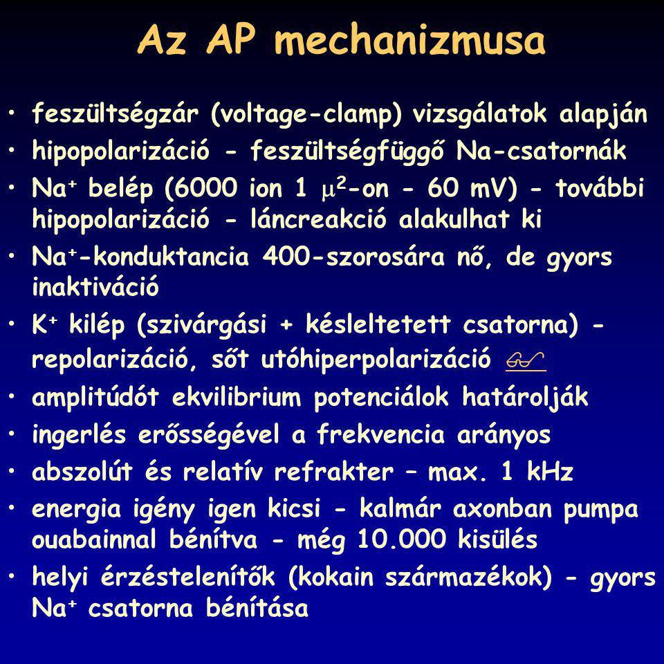 Az AP mechanizmusa feszültségzár (voltage-clamp) vizsgálatok alapján hipopolarizáció - feszültségfüggő Na-csatornák Na + belép (6000 ion 1  2 -on - 6