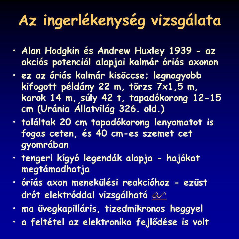 Az ingerlékenység vizsgálata Alan Hodgkin és Andrew Huxley 1939 - az akciós potenciál alapjai kalmár óriás axonon ez az óriás kalmár kisöccse; legnagy