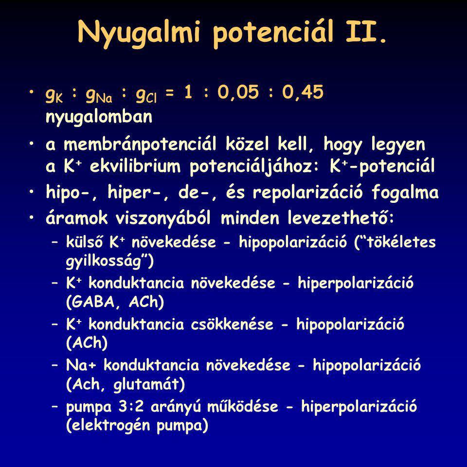 Nyugalmi potenciál II. g K : g Na : g Cl = 1 : 0,05 : 0,45 nyugalomban a membránpotenciál közel kell, hogy legyen a K + ekvilibrium potenciáljához: K
