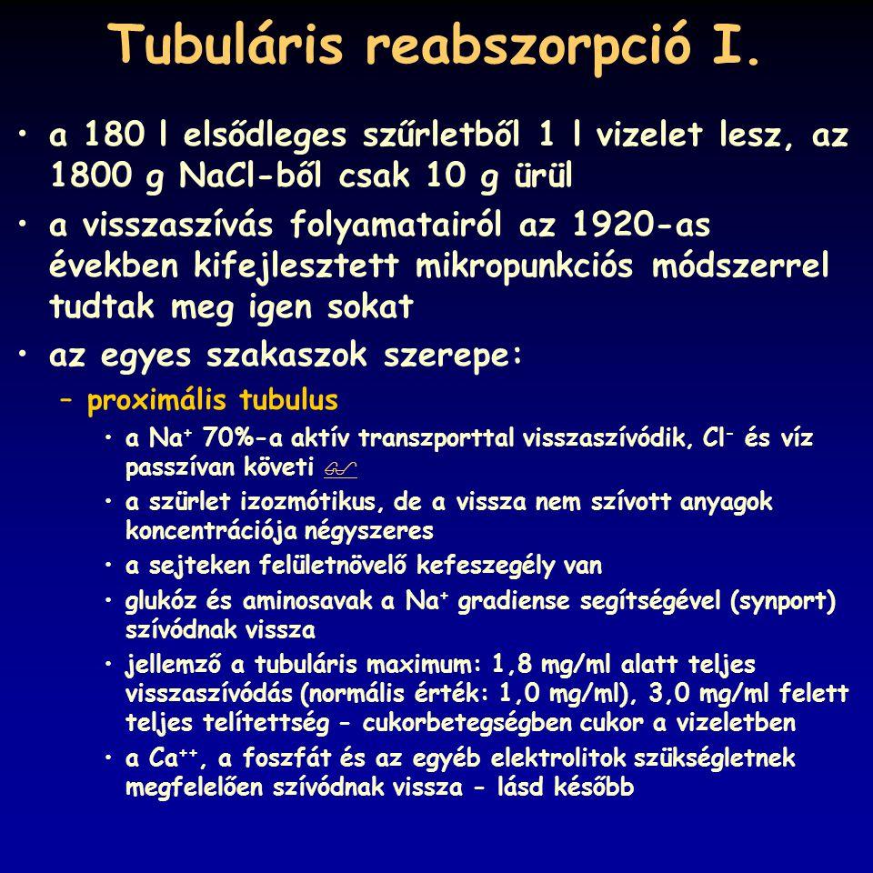 Tubuláris reabszorpció I. a 180 l elsődleges szűrletből 1 l vizelet lesz, az 1800 g NaCl-ből csak 10 g ürül a visszaszívás folyamatairól az 1920-as év