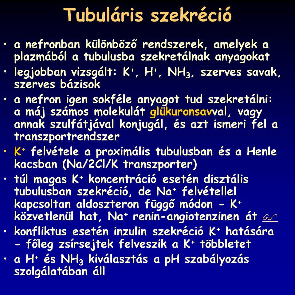 Tubuláris szekréció a nefronban különböző rendszerek, amelyek a plazmából a tubulusba szekretálnak anyagokat legjobban vizsgált: K +, H +, NH 3, szerv