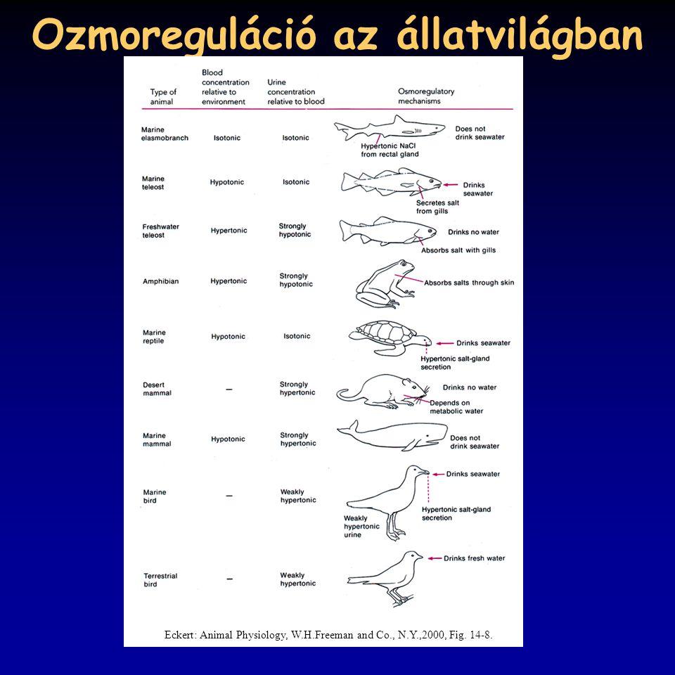 Ozmoreguláció az állatvilágban Eckert: Animal Physiology, W.H.Freeman and Co., N.Y.,2000, Fig. 14-8.