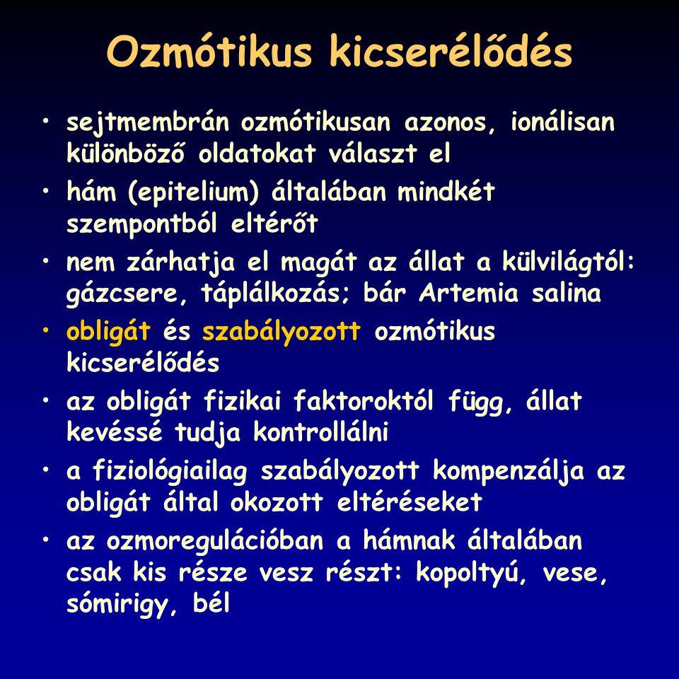 Ozmótikus kicserélődés sejtmembrán ozmótikusan azonos, ionálisan különböző oldatokat választ el hám (epitelium) általában mindkét szempontból eltérőt