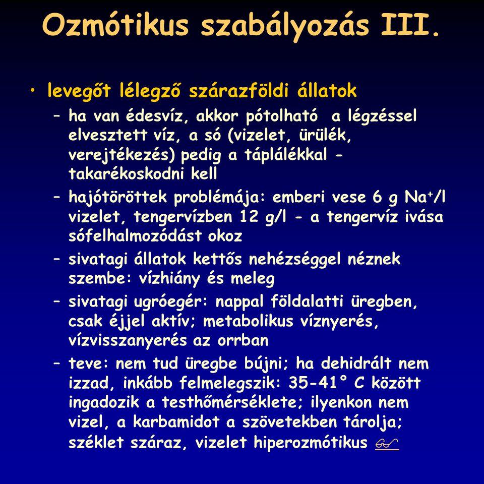pH szabályozás II.respiratórikus alkalózis és acidózis: hiper-, ill.
