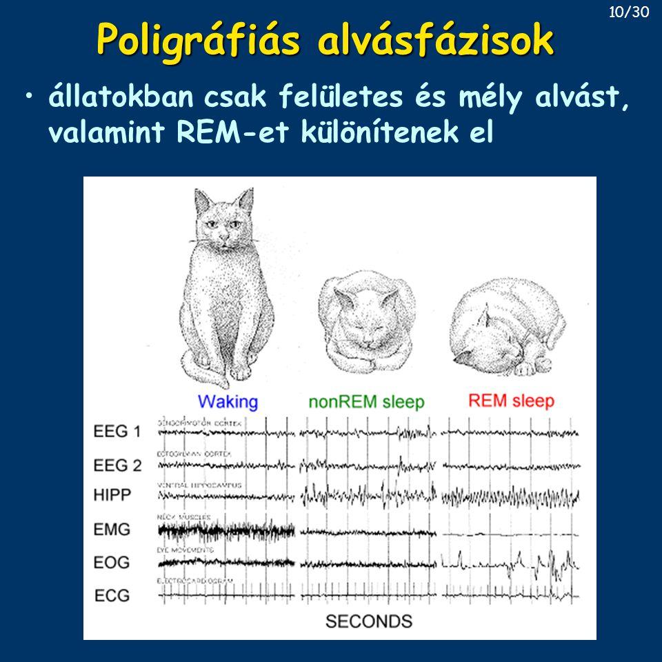 Poligráfiás alvásfázisok állatokban csak felületes és mély alvást, valamint REM-et különítenek el 10/30