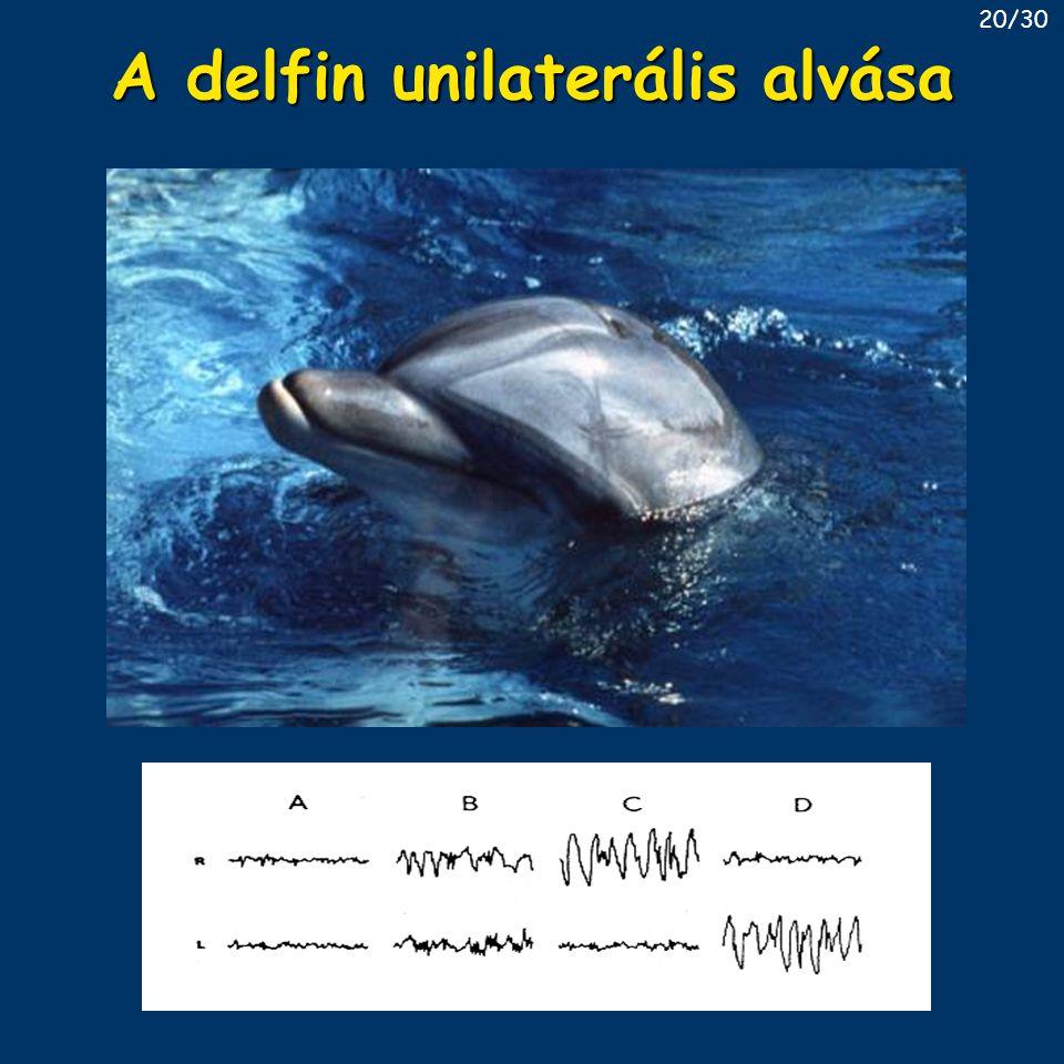 A delfin unilaterális alvása 20/30
