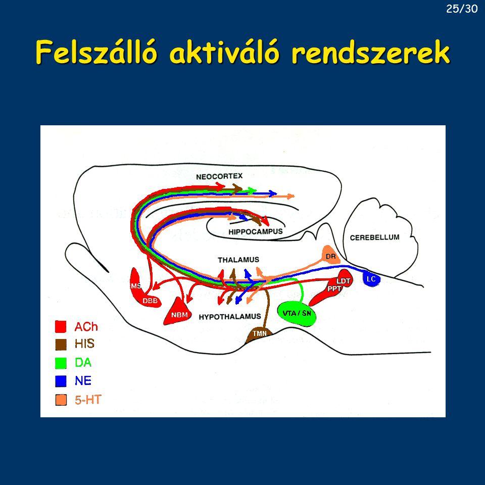 Felszálló aktiváló rendszerek 25/30
