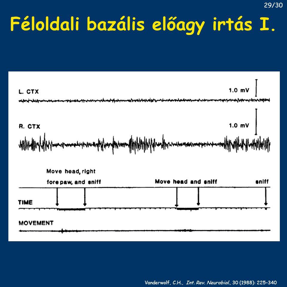 Féloldali bazális előagy irtás I. Vanderwolf, C.H., Int. Rev. Neurobiol., 30 (1988): 225-340 29/30