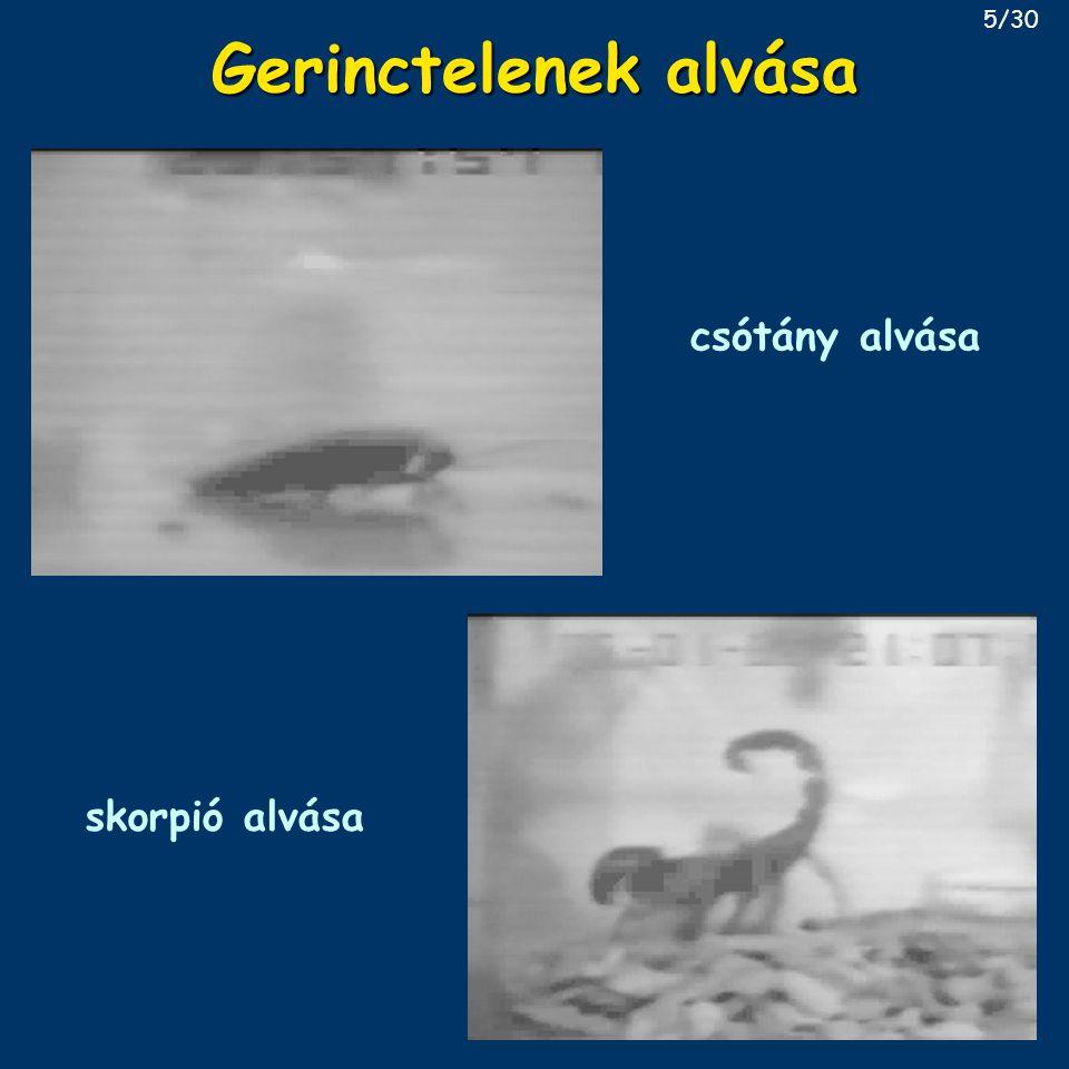 Gerinctelenek alvása csótány alvása skorpió alvása 5/30