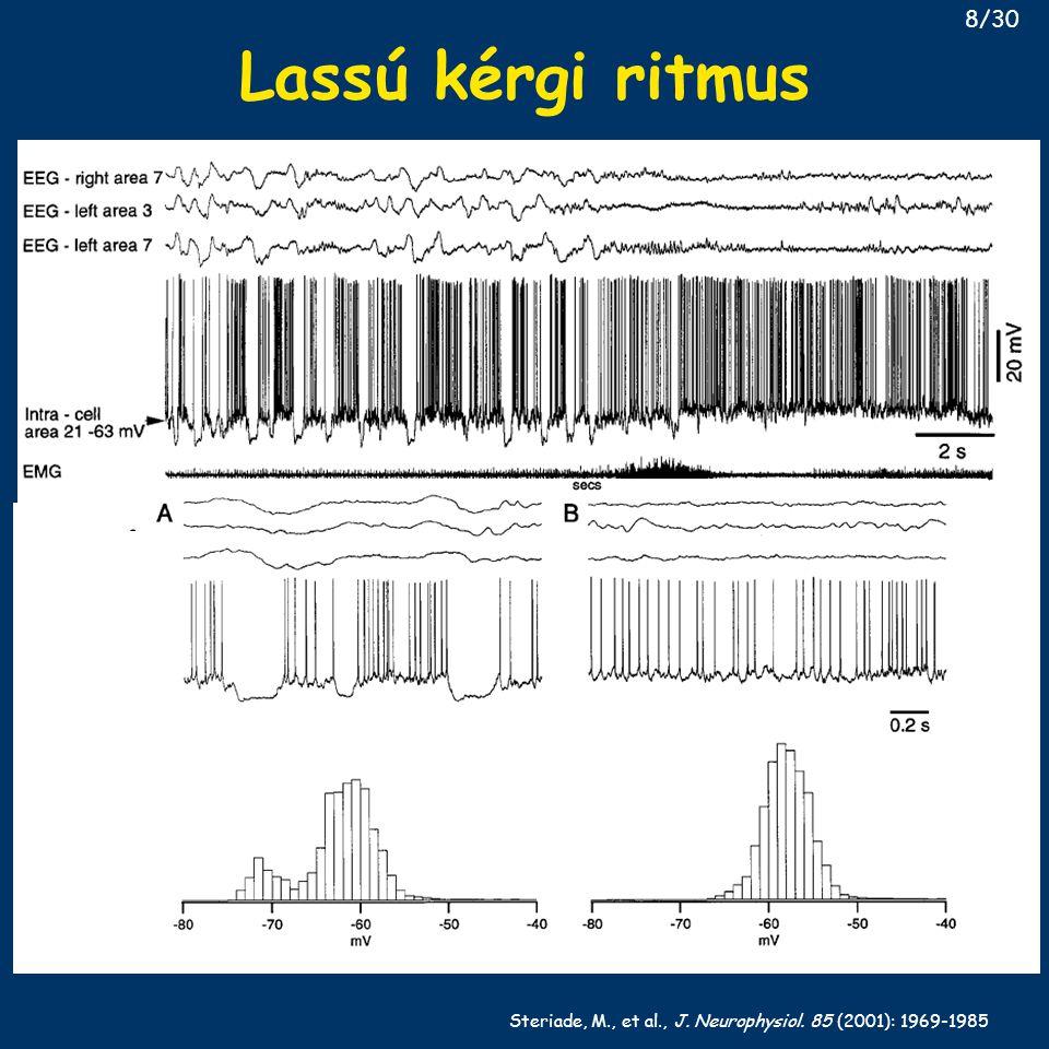 Steriade, M., et al., J. Neurophysiol. 85 (2001): 1969-1985 Lassú kérgi ritmus 8/30