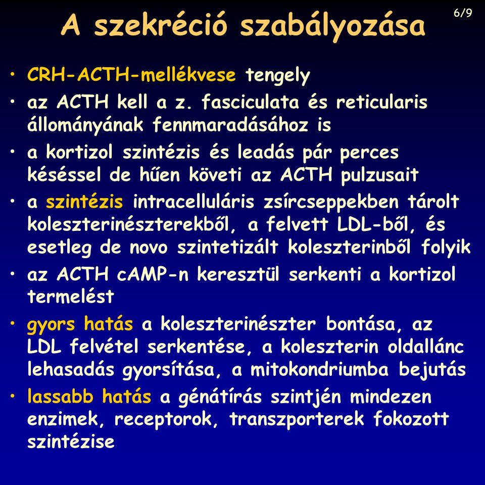 A szekréció szabályozása CRH-ACTH-mellékvese tengely az ACTH kell a z. fasciculata és reticularis állományának fennmaradásához is a kortizol szintézis