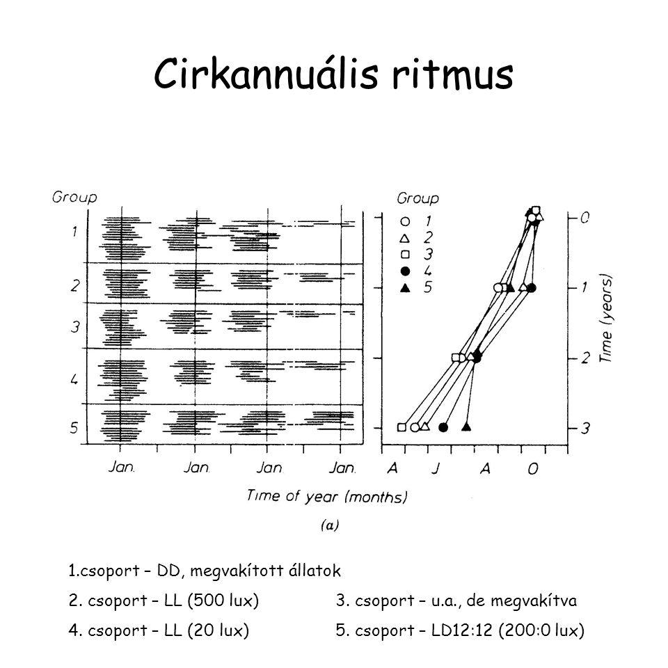 Cirkannuális ritmus 1.csoport – DD, megvakított állatok 2. csoport – LL (500 lux)3. csoport – u.a., de megvakítva 4. csoport – LL (20 lux)5. csoport –