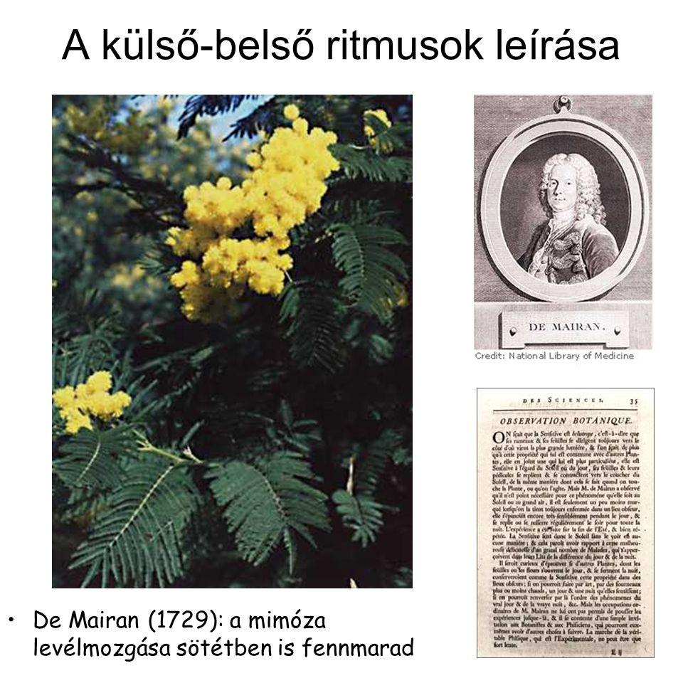 A külső-belső ritmusok leírása De Mairan (1729): a mimóza levélmozgása sötétben is fennmarad