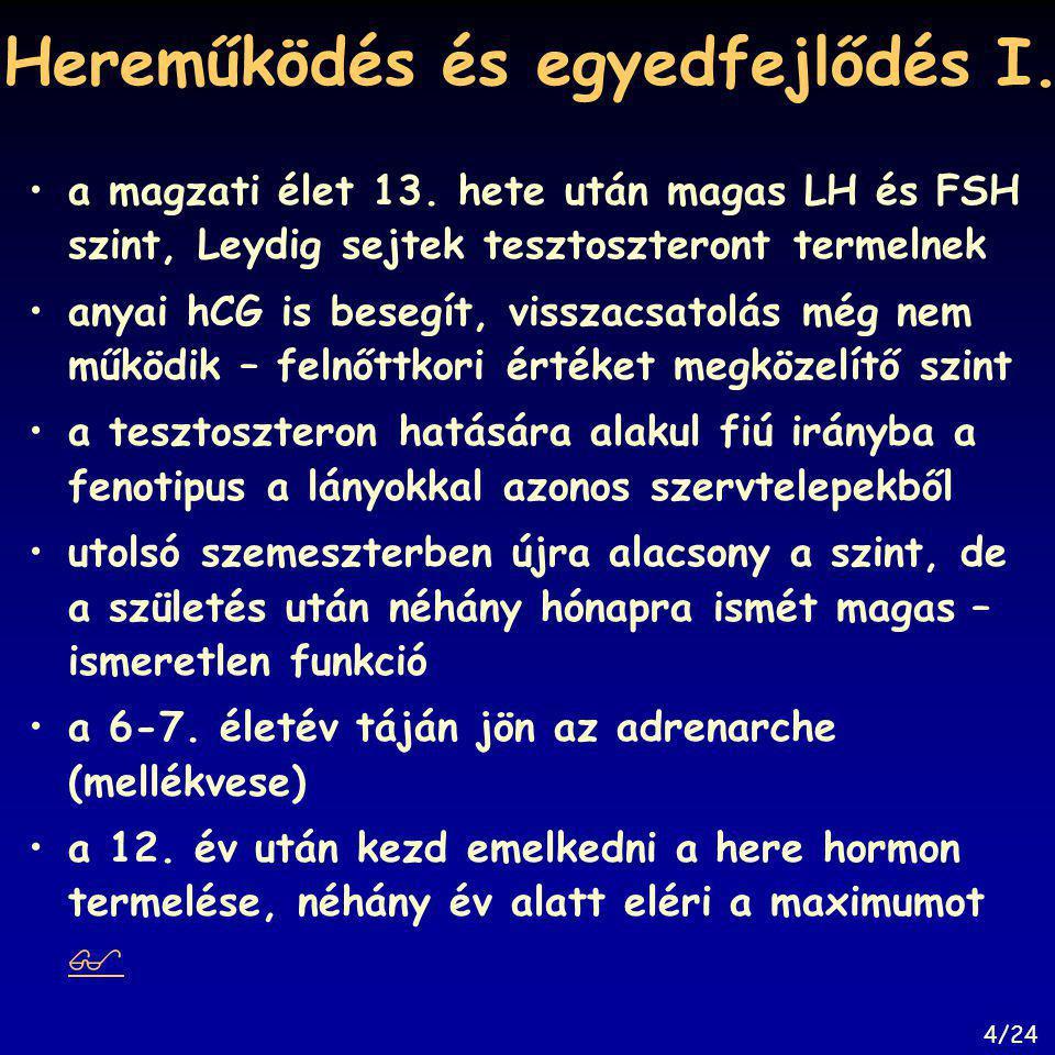 Hereműködés és egyedfejlődés I. a magzati élet 13. hete után magas LH és FSH szint, Leydig sejtek tesztoszteront termelnek anyai hCG is besegít, vissz