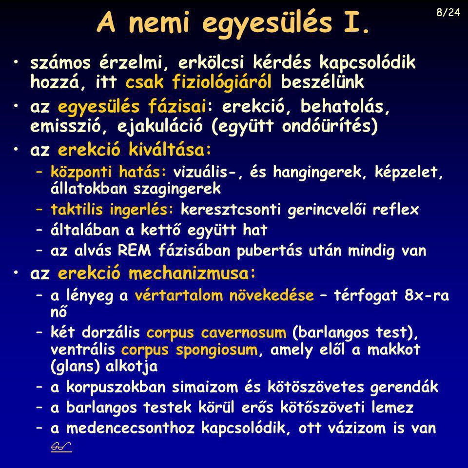 A nemi egyesülés I. számos érzelmi, erkölcsi kérdés kapcsolódik hozzá, itt csak fiziológiáról beszélünk az egyesülés fázisai: erekció, behatolás, emis
