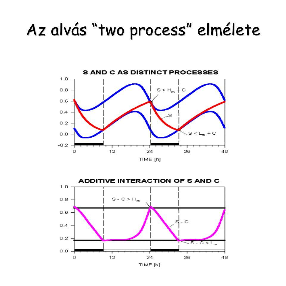 """Az alvás """"two process"""" elmélete"""
