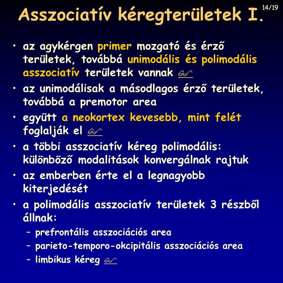 Asszociatív kéregterületek I. az agykérgen primer mozgató és érző területek, továbbá unimodális és polimodális asszociatív területek vannak   az uni