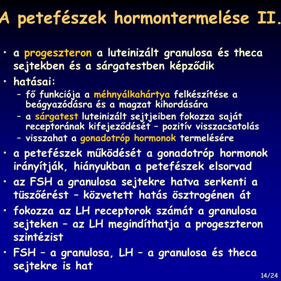 A petefészek hormontermelése II.