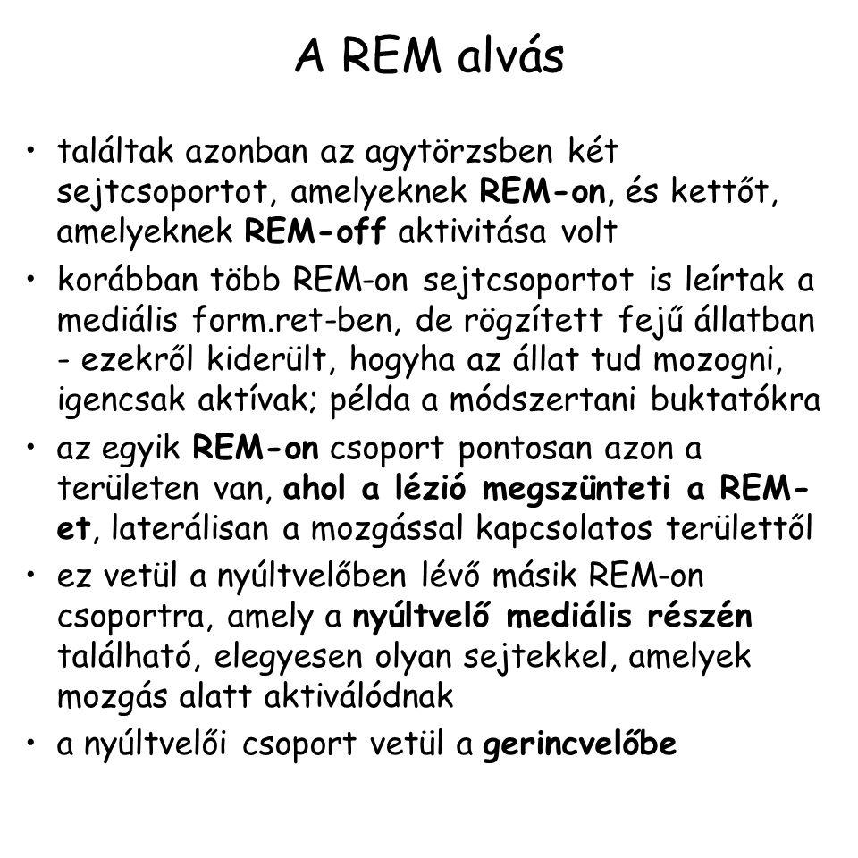 A REM alvás találtak azonban az agytörzsben két sejtcsoportot, amelyeknek REM-on, és kettőt, amelyeknek REM-off aktivitása volt korábban több REM-on sejtcsoportot is leírtak a mediális form.ret-ben, de rögzített fejű állatban - ezekről kiderült, hogyha az állat tud mozogni, igencsak aktívak; példa a módszertani buktatókra az egyik REM-on csoport pontosan azon a területen van, ahol a lézió megszünteti a REM- et, laterálisan a mozgással kapcsolatos területtől ez vetül a nyúltvelőben lévő másik REM-on csoportra, amely a nyúltvelő mediális részén található, elegyesen olyan sejtekkel, amelyek mozgás alatt aktiválódnak a nyúltvelői csoport vetül a gerincvelőbe