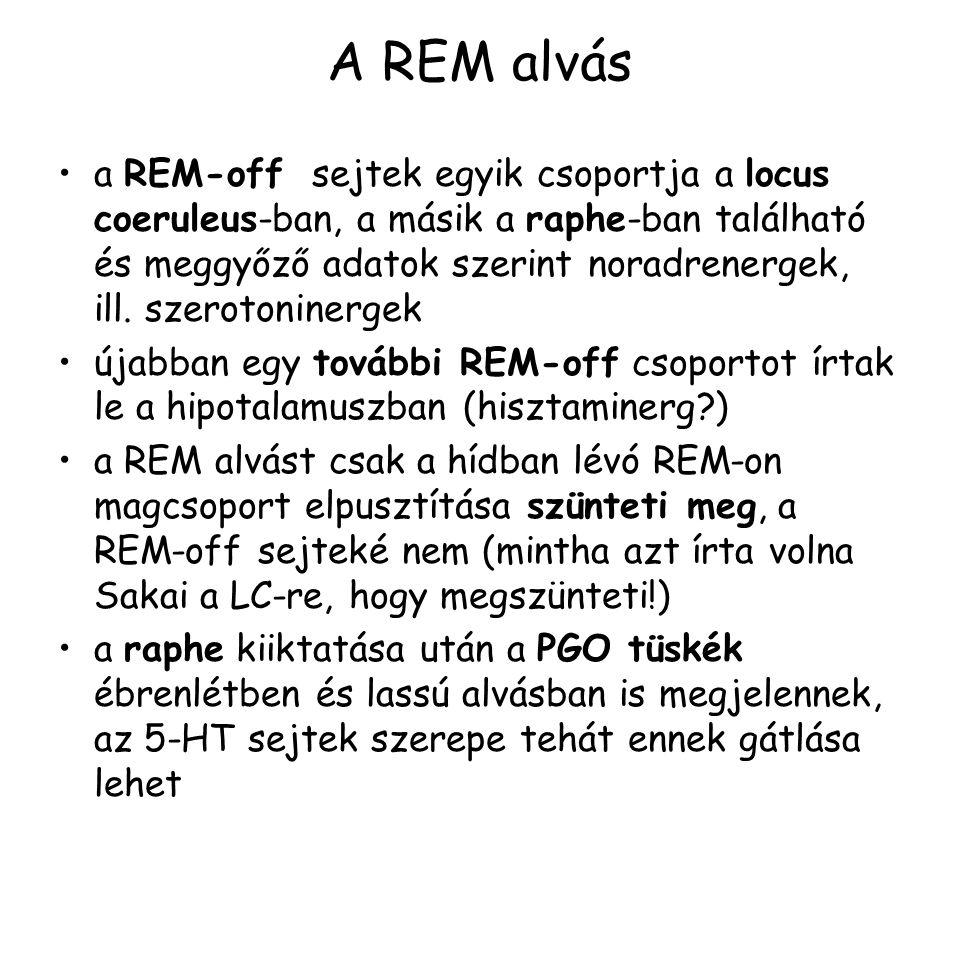 A REM alvás a REM-off sejtek egyik csoportja a locus coeruleus-ban, a másik a raphe-ban található és meggyőző adatok szerint noradrenergek, ill.