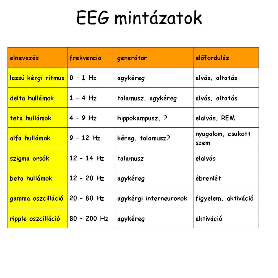 EEG mintázatok