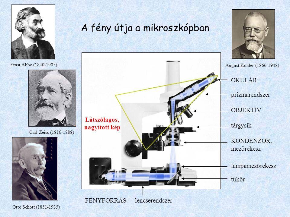 A fény útja a mikroszkópban August Köhler (1866-1948) OKULÁR prizmarendszer OBJEKTÍV tárgysík KONDENZOR, mezőrekesz lámpamezőrekesz tükör FÉNYFORRÁS l