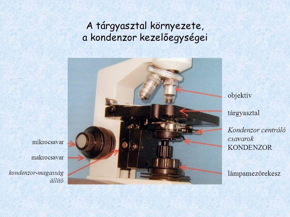A tárgyasztal környezete, a kondenzor kezelőegységei mikrocsavar makrocsavar kondenzor-magasság állító objektív tárgyasztal Kondenzor centráló csavaro