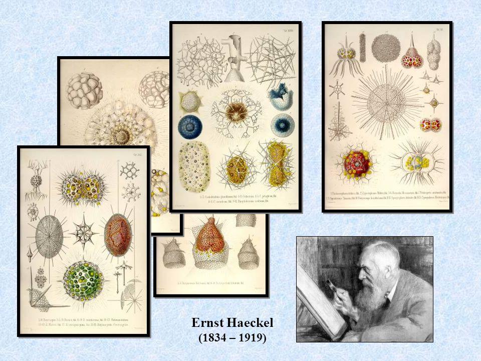 Ernst Haeckel (1834 – 1919)