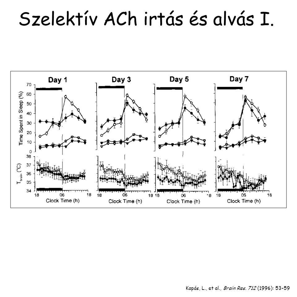 Kapás, L., et al., Brain Res. 712 (1996): 53-59 Szelektív ACh irtás és alvás I.