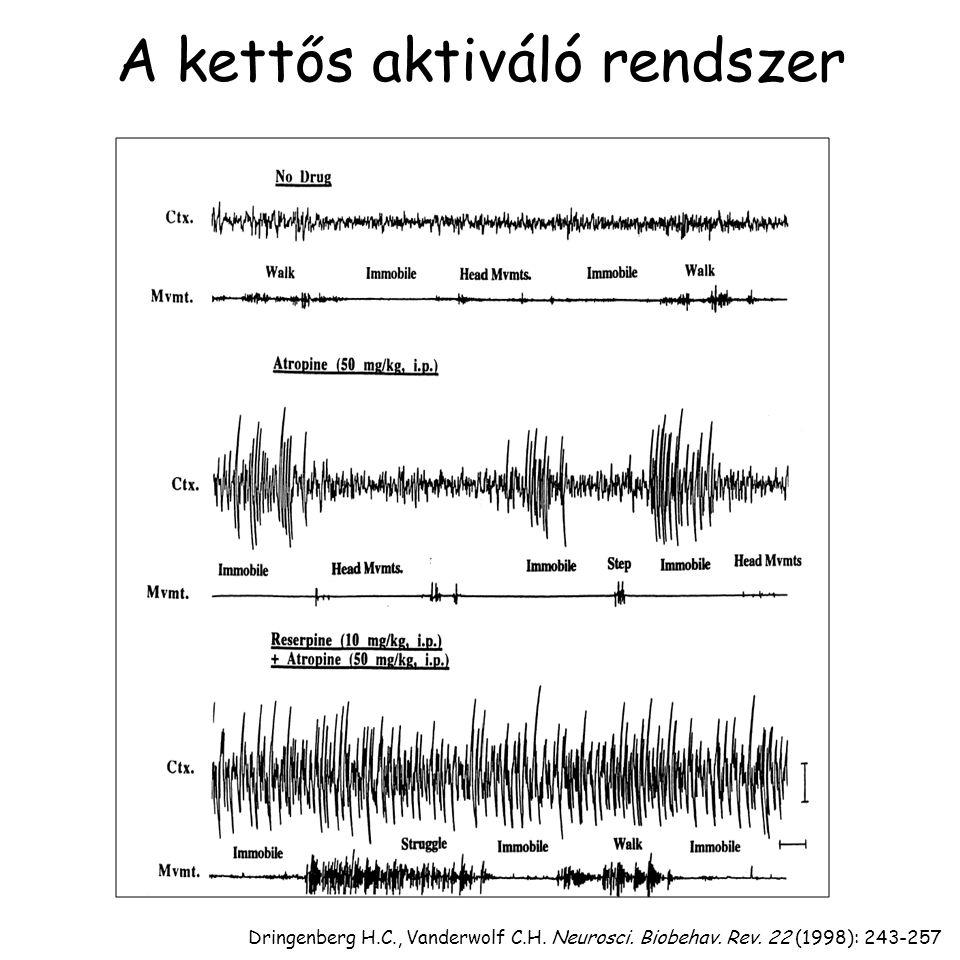 Dringenberg H.C., Vanderwolf C.H. Neurosci. Biobehav. Rev. 22 (1998): 243-257 A kettős aktiváló rendszer