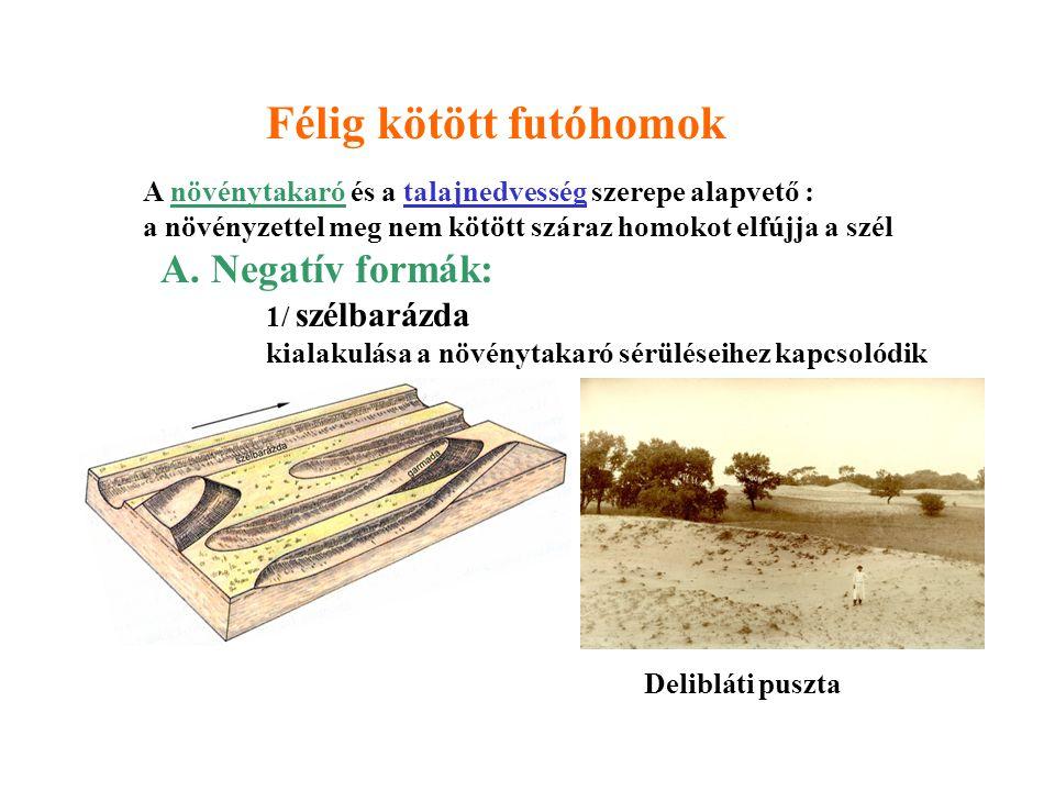 3/ Deflációs mélyedés - szabálytalan alakú, minden oldalról zárt mélyedés - lee oldalán peremi homokfelhalmozódás - alján deflációs maradéktakaró 2/ Széllyuk: fejlődésében megakadt szélbarázda Adott futóhomok területen csak meghatározott típusú szélbarázdák képződhetnek A növényborítottság, a talajvíz mélysége, a homokanyag vastagsága szerint alakváltozatai vannak Rétyi nyír
