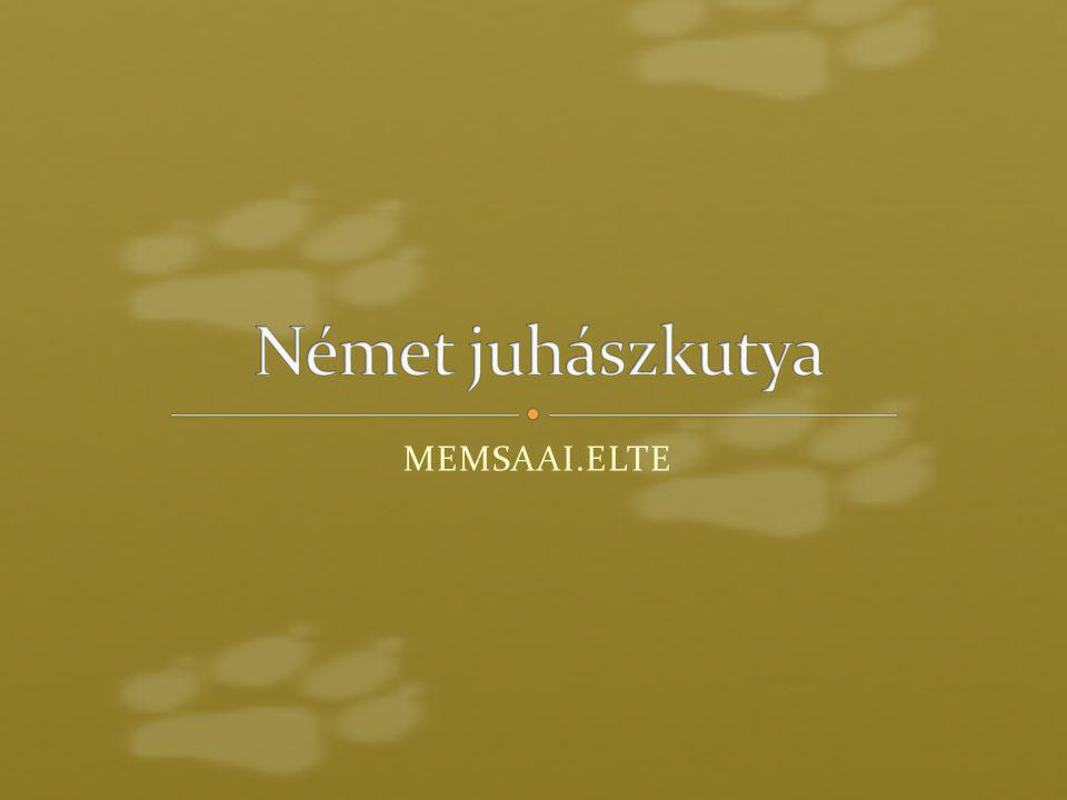 MEMSAAI.ELTE