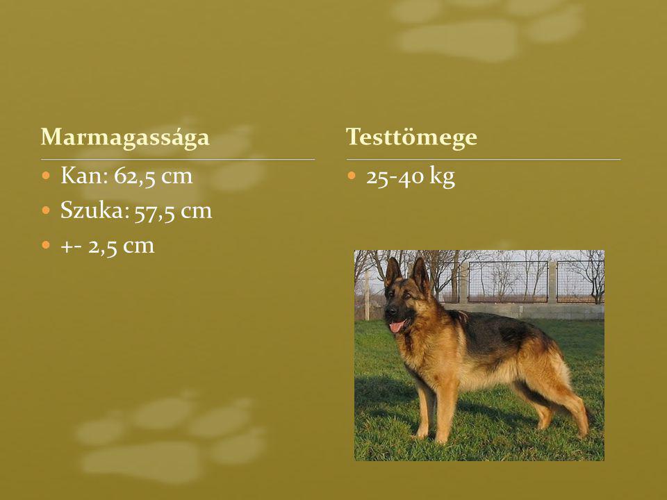 Marmagassága Kan: 62,5 cm Szuka: 57,5 cm +- 2,5 cm 25-40 kg Testtömege