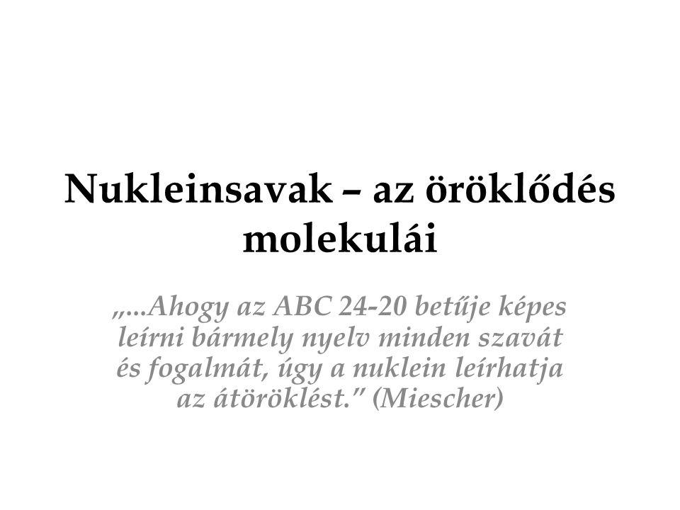 """Nukleinsavak – az öröklődés molekulái """"...Ahogy az ABC 24-20 betűje képes leírni bármely nyelv minden szavát és fogalmát, úgy a nuklein leírhatja az á"""