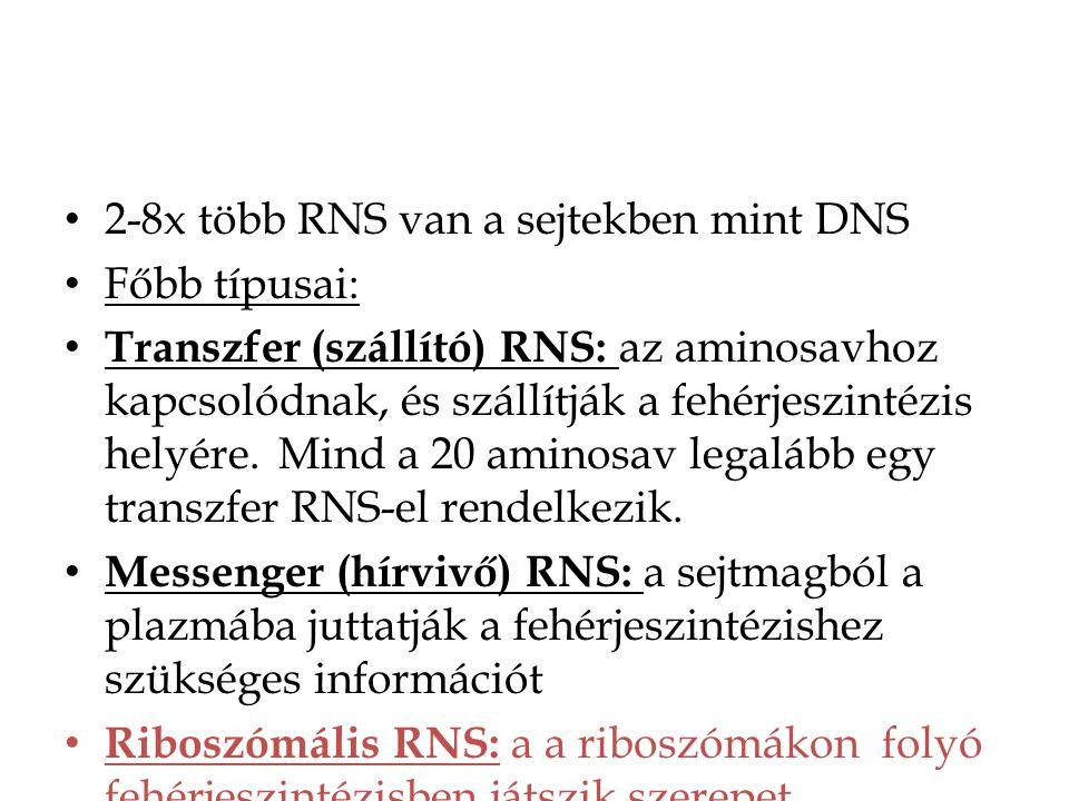2-8x több RNS van a sejtekben mint DNS Főbb típusai: Transzfer (szállító) RNS: az aminosavhoz kapcsolódnak, és szállítják a fehérjeszintézis helyére.