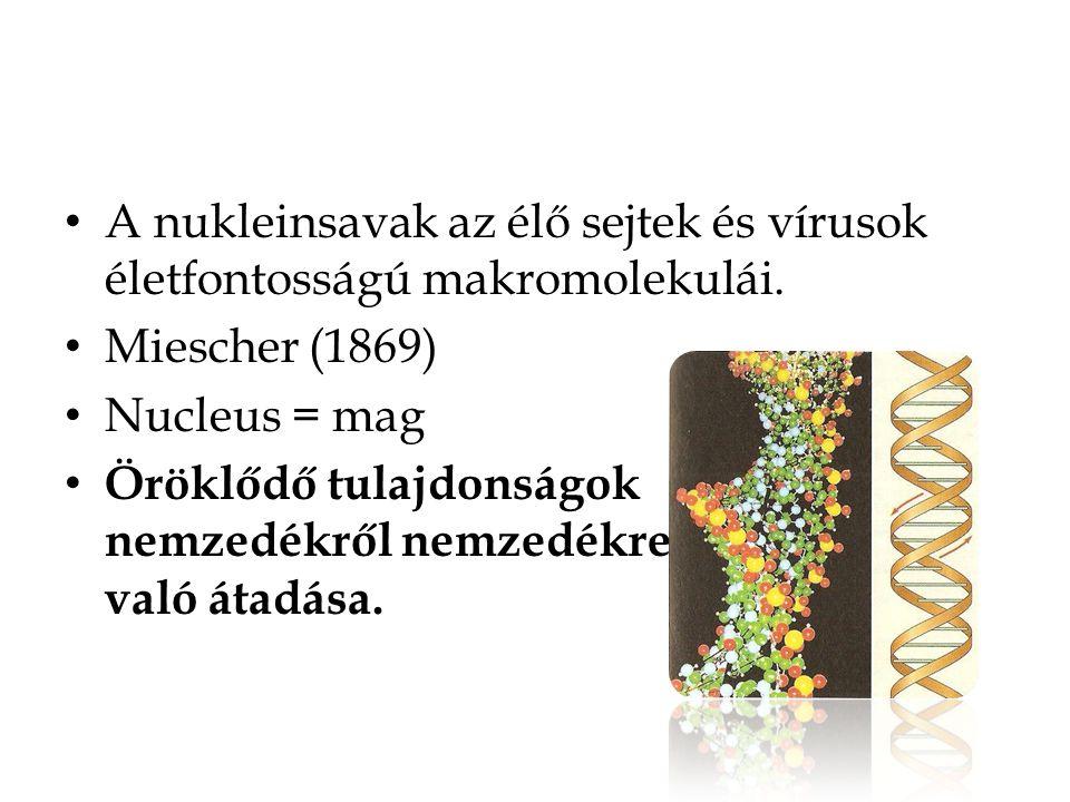 A nukleinsavak az élő sejtek és vírusok életfontosságú makromolekulái. Miescher (1869) Nucleus = mag Öröklődő tulajdonságok nemzedékről nemzedékre val