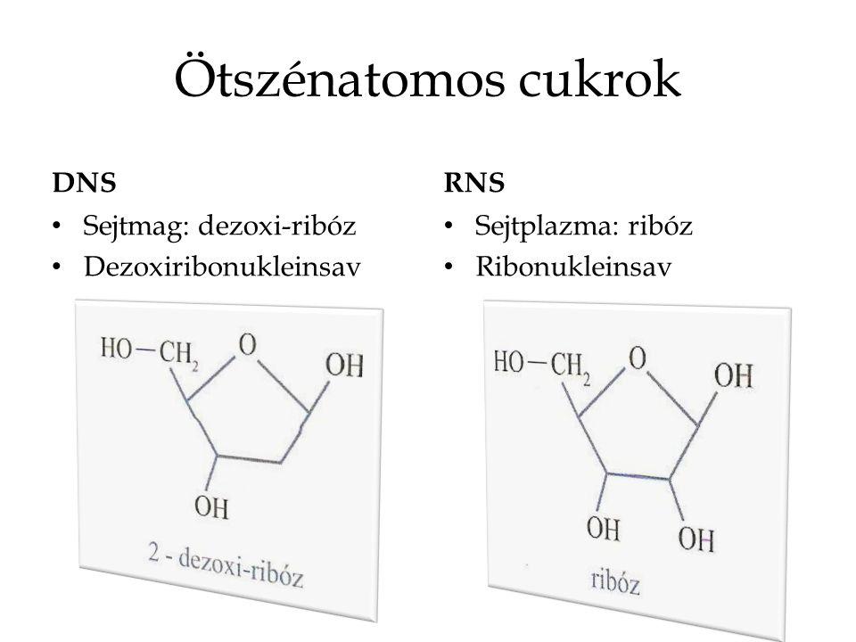 Nitrogéntartalmú heterociklusos bázisok