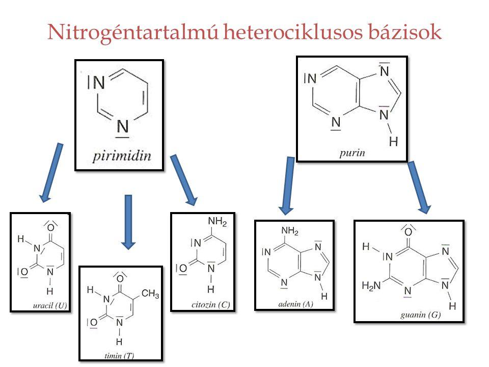 Hogy kapcsolódnak egymáshoz a nukleinsavakat felépítő molekulák.