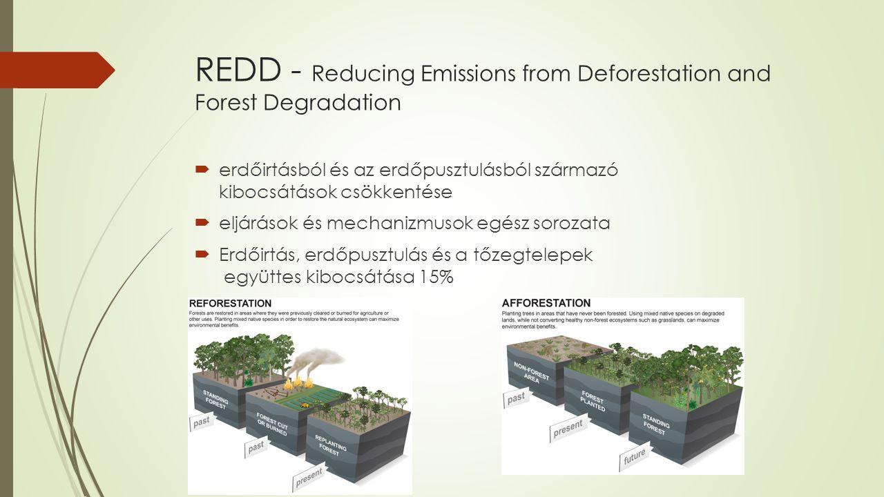 Bali, Indonézia 2007 COP13  2012 utáni kibocsátási célok tárgyalása a fejlett országokban  Döntések:  Erdők, erdőirtások kezelése  Technológia  Norvég kormány nemzetközi klíma- és erdőkezdeményezés (International Climate and Forests Initiative)  Bali akcióterv:  erdők megőrzése  fenntartható erdőgazdálkodás  széndioxid-kvóták növelése