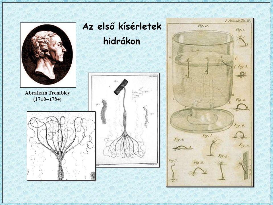 Az első kísérletek hidrákon Abraham Trembley (1710–1784)