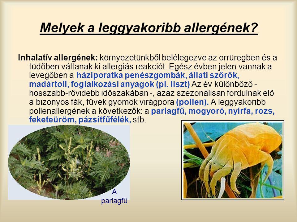 Melyek a leggyakoribb allergének? Inhalatív allergének: környezetünkből belélegezve az orrüregben és a tüdőben váltanak ki allergiás reakciót. Egész é