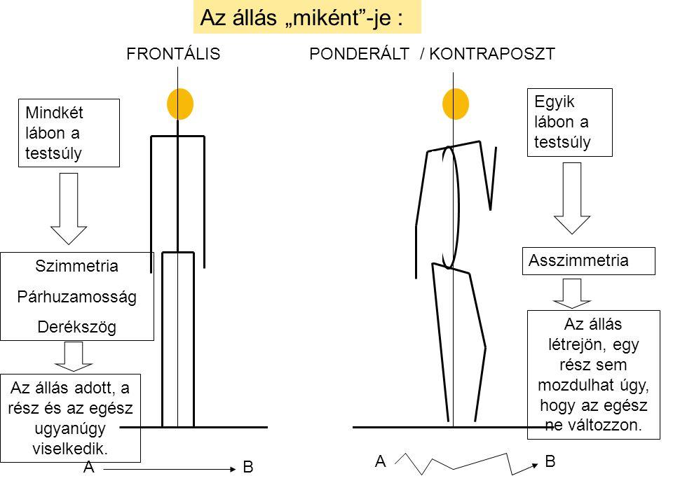 """FRONTÁLIS PONDERÁLT / KONTRAPOSZT Az állás """"miként""""-je : A A B B Mindkét lábon a testsúly Egyik lábon a testsúly Szimmetria Párhuzamosság Derékszög As"""