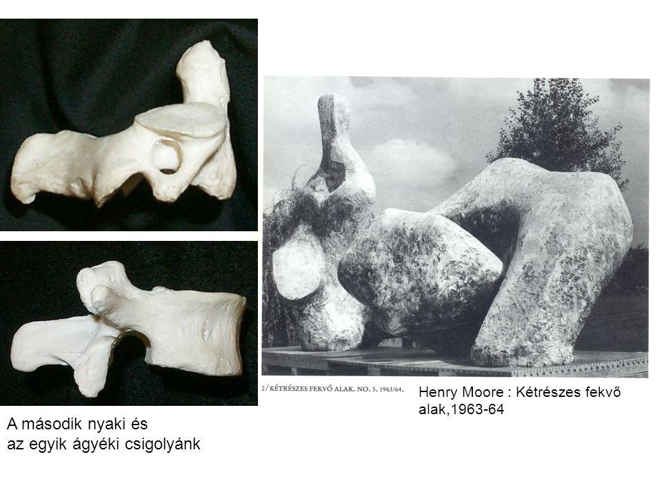 Henry Moore : Kétrészes fekvő alak,1963-64 A második nyaki és az egyik ágyéki csigolyánk
