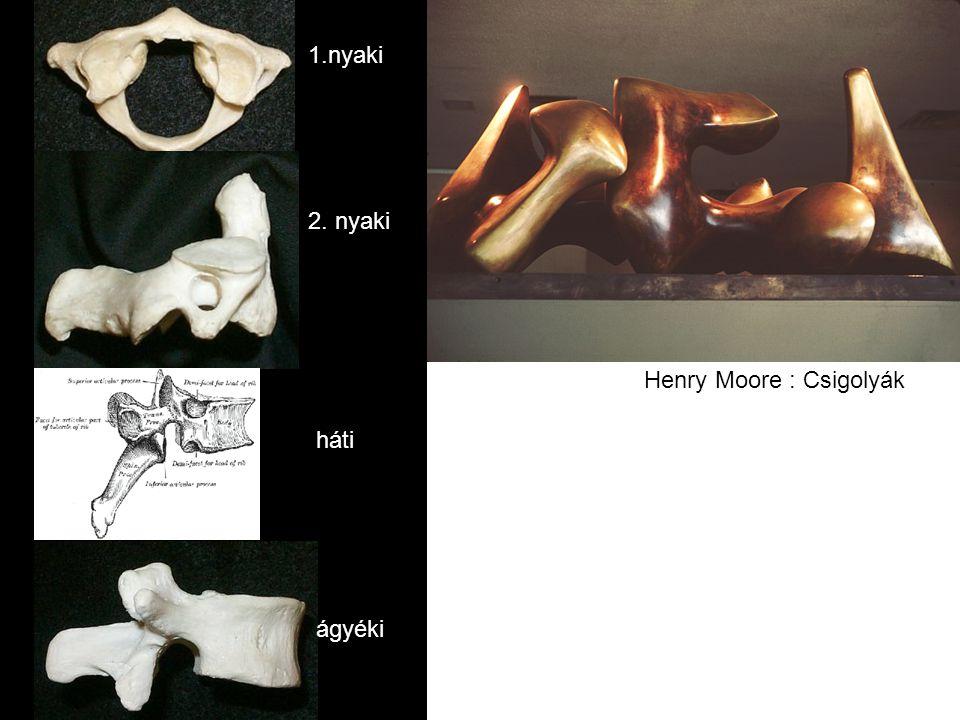 Henry Moore : Csigolyák 1.nyaki 2. nyaki háti ágyéki