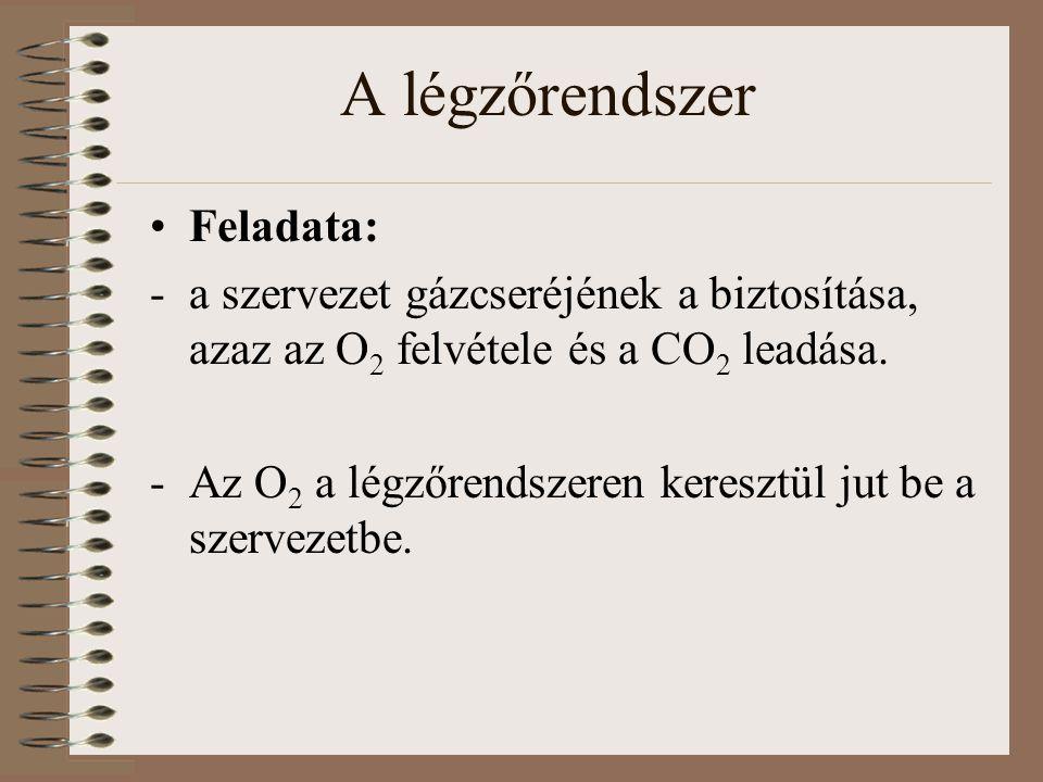 Feladata: -a szervezet gázcseréjének a biztosítása, azaz az O 2 felvétele és a CO 2 leadása. -Az O 2 a légzőrendszeren keresztül jut be a szervezetbe.